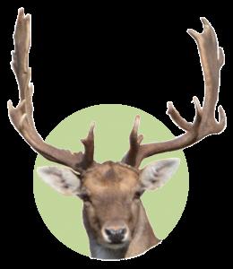 Logo Damhirsch